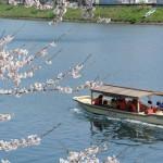 桜遊覧船130328